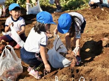 201026_お芋掘り (11).jpg