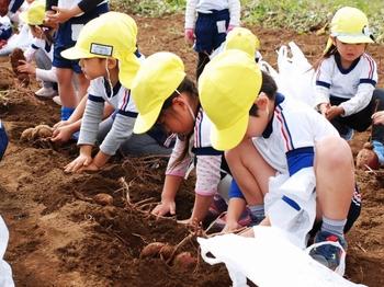 201026_お芋掘り (4).jpg